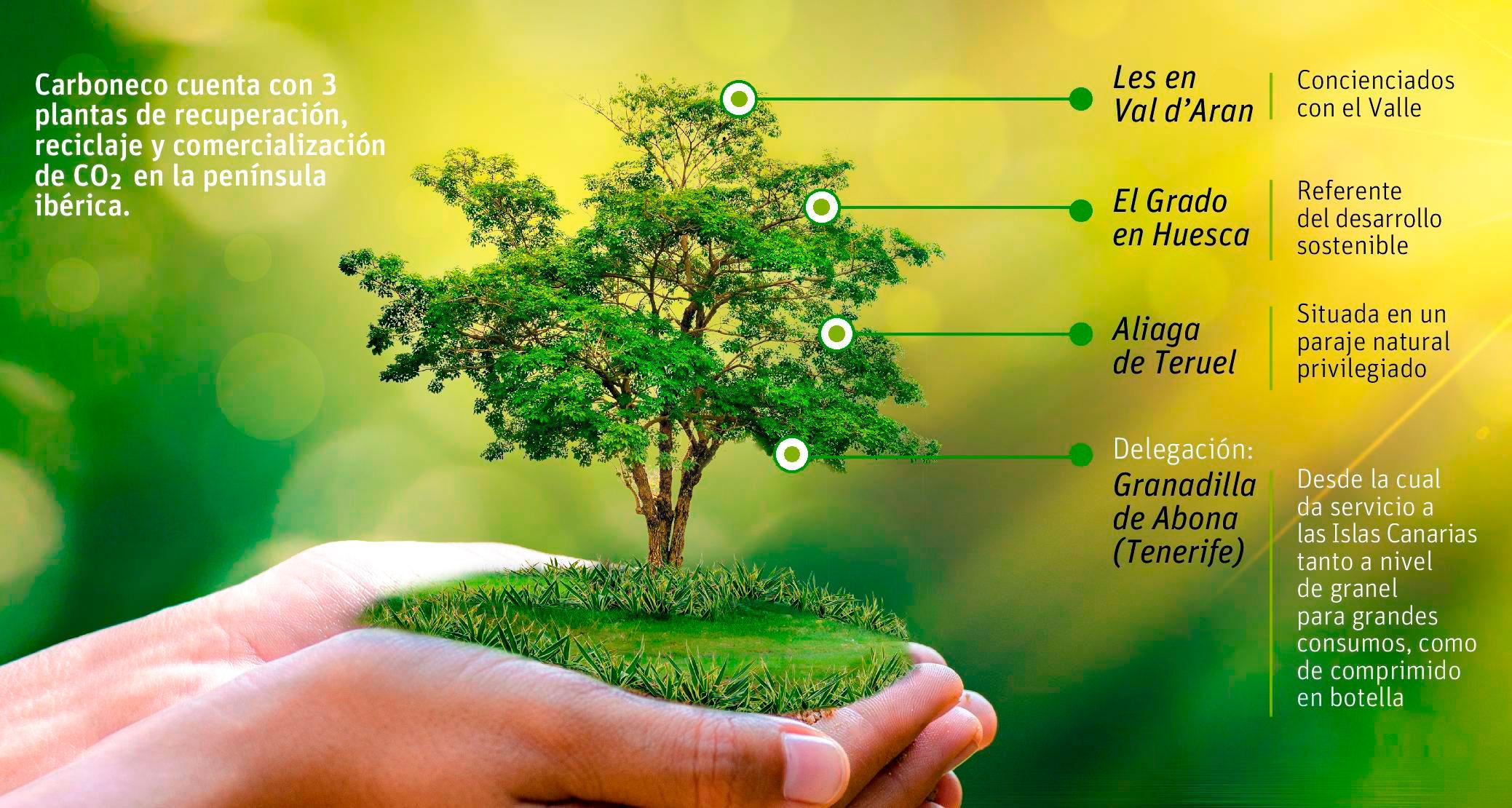 CARBONECO-PLANTAS-CO2-